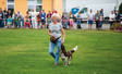 Bildserie Hundetrainer 24 The Best of Straßentraining 2017